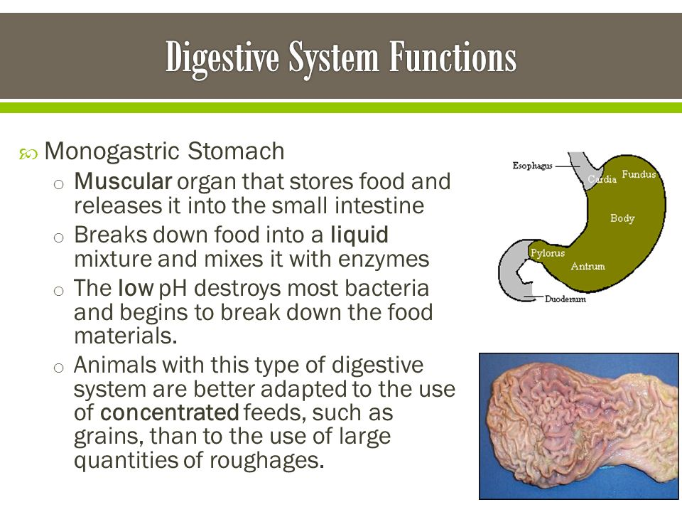 Animal Digestion. - ppt video online download