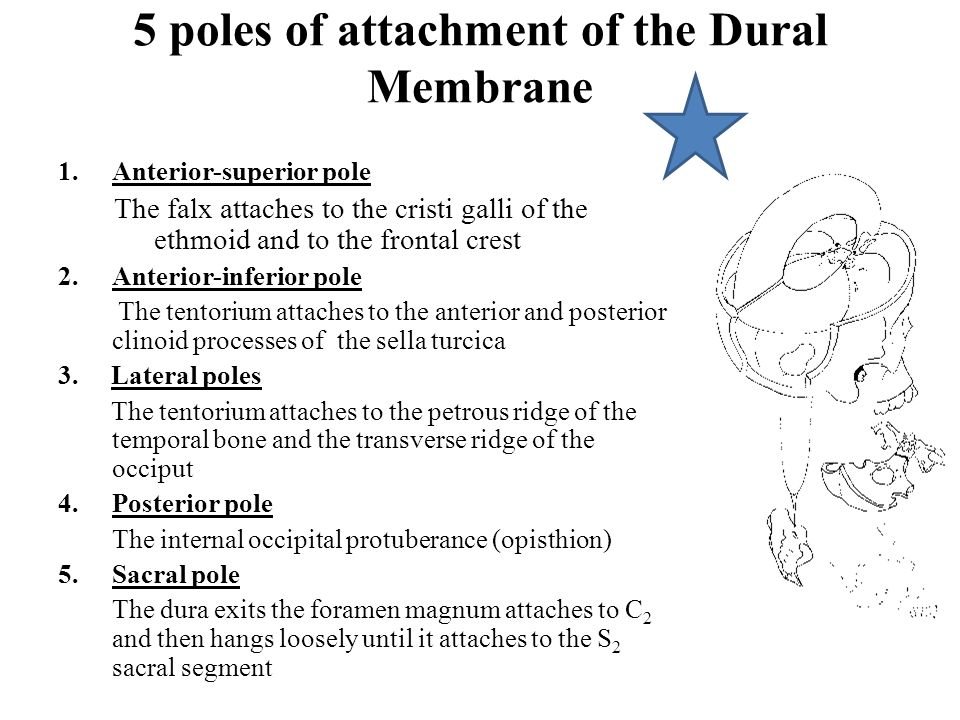 5 poles of attachment of the Dural Membrane