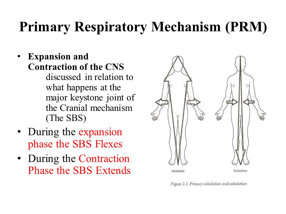 Primary Respiratory Mechanism (PRM)