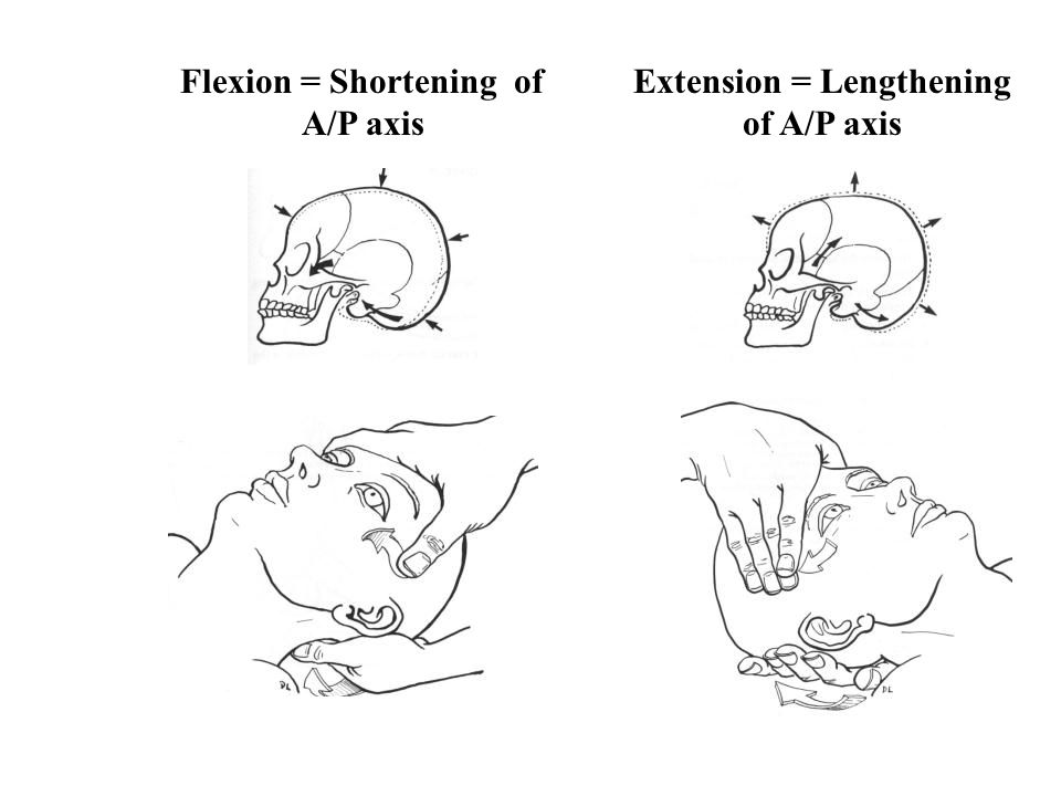 Flexion = Shortening of A/P axis Extension = Lengthening of A/P axis