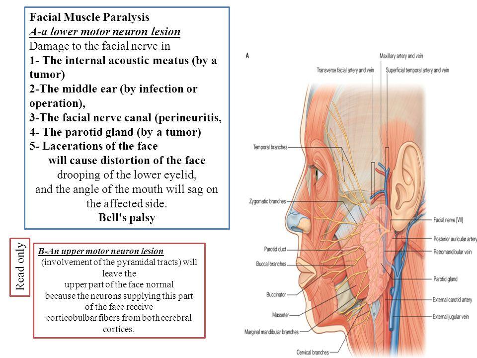 Facial muscle damage — img 15