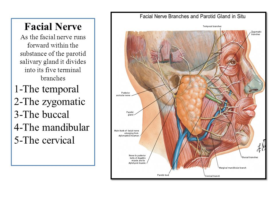 Cancer in facial nerves