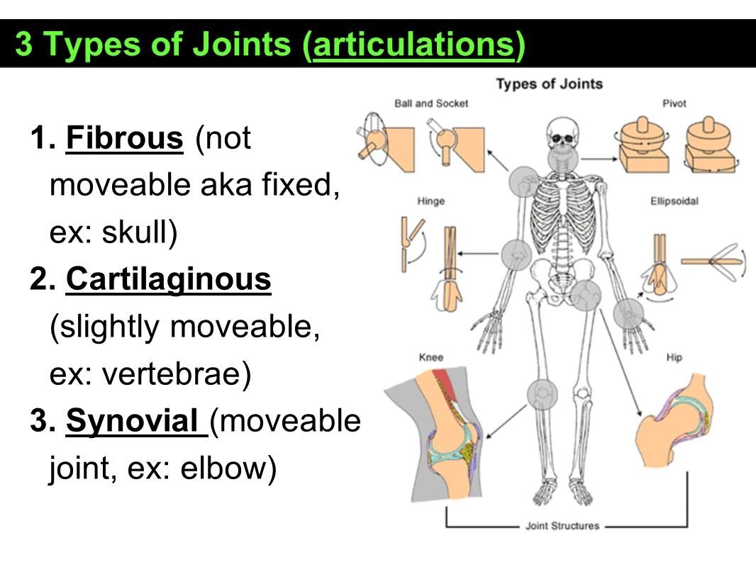 Types Of Joint Images - human anatomy organs diagram