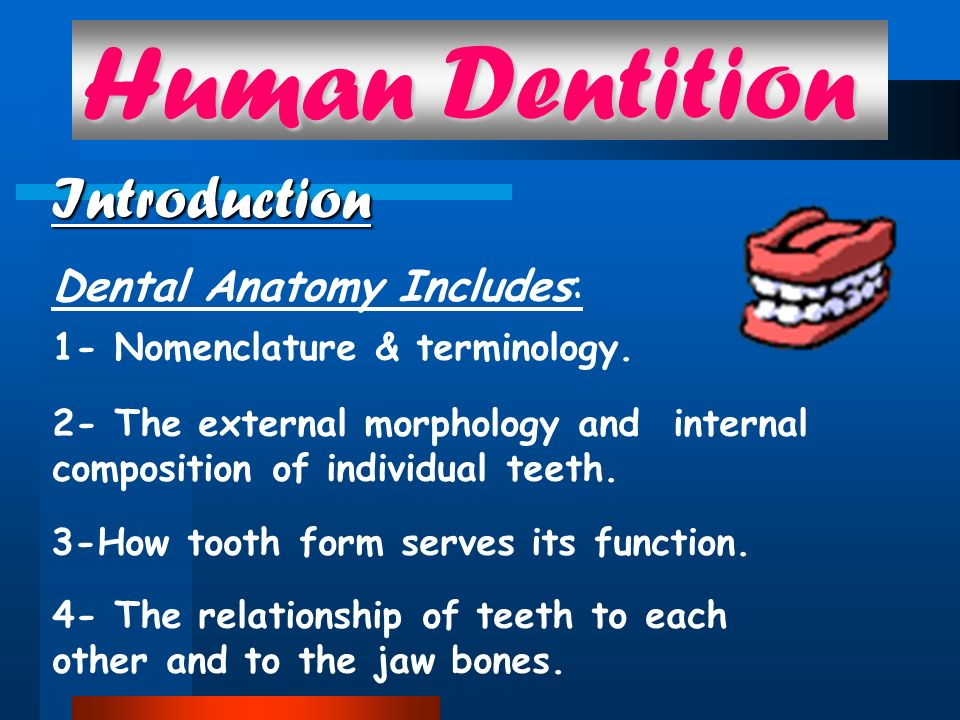 Human Dentition Introduction Dental Anatomy Includes: - ppt download