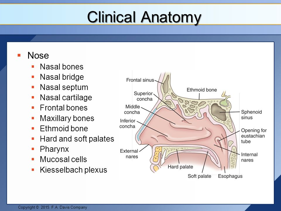 Face and Related Structure Pathologies - ppt video online download