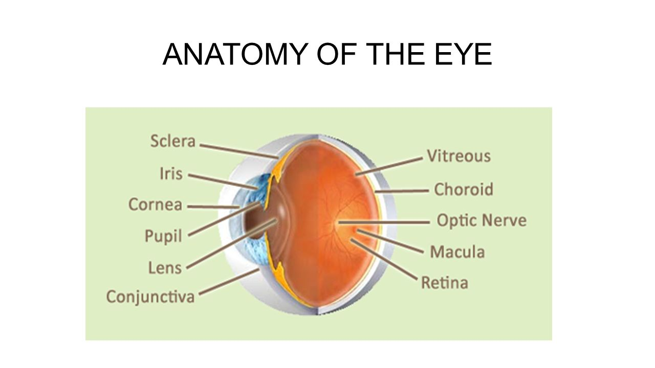 ANATOMY AND CODING OF THE EYE - ppt video online download