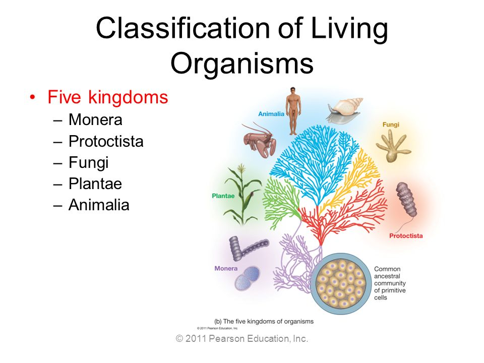 Cl Ification Of Living Organisms