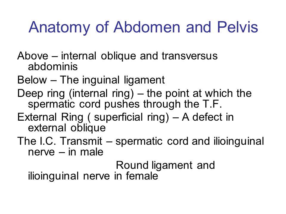 Anatomy Of Abdomen And Pelvis Ppt Video Online Download