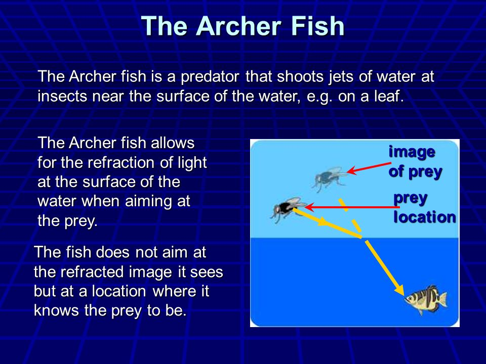 The Archer Fish The Archer fish is a predator that shoots jets of water at insects near the surface of the water, e.g. on a leaf.