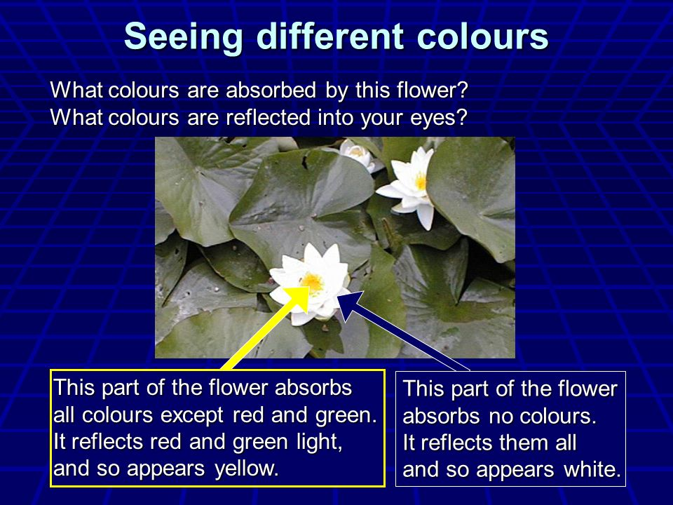 Seeing different colours