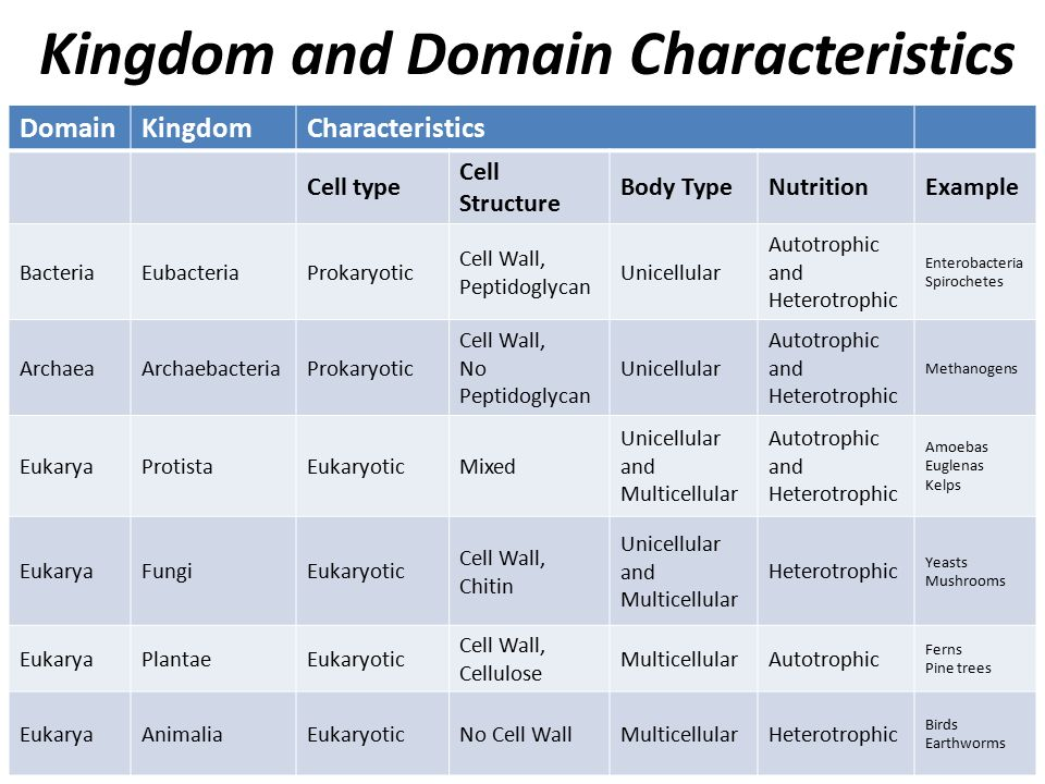 kingdom and domain characteristics