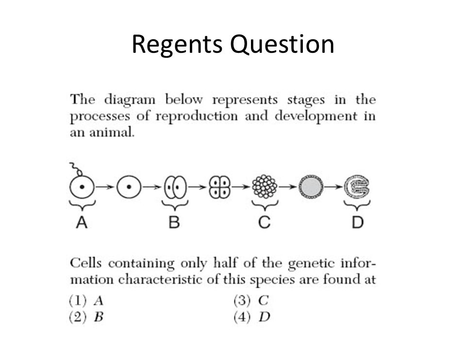 Mitosis regents diagram auto electrical wiring diagram menstrual cycle shedding of the uterine lining ppt download rh slideplayer com easy mitosis diagram mitosis ccuart Gallery