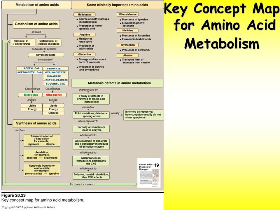 Amino Acids Metabolism 3 - ppt video online download on bodily acids, carboxylic acids, common organic acids, haloacetic acids, names of acids, types of acids, natural acids, examples of acids, value of pka table acids, household acids, naming acids, pka values of organic acids,