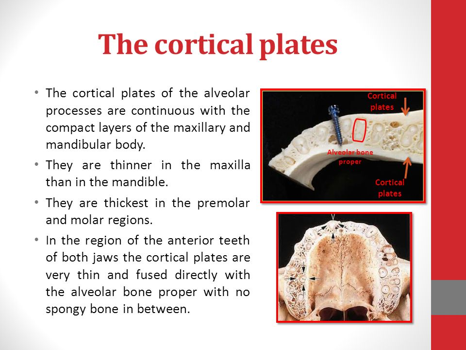 periodontium dr fatma elturki ppt video online download