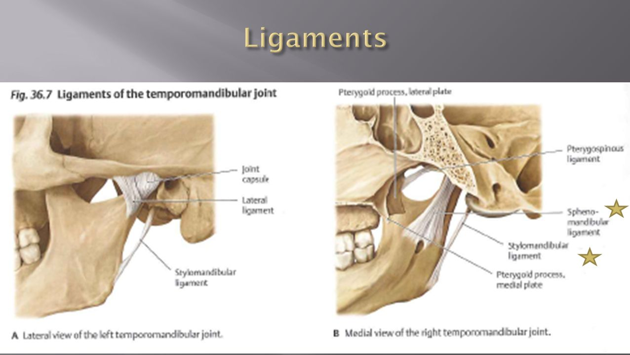 Edward Via Virginia College of Osteopathic Medicine Block - ppt download