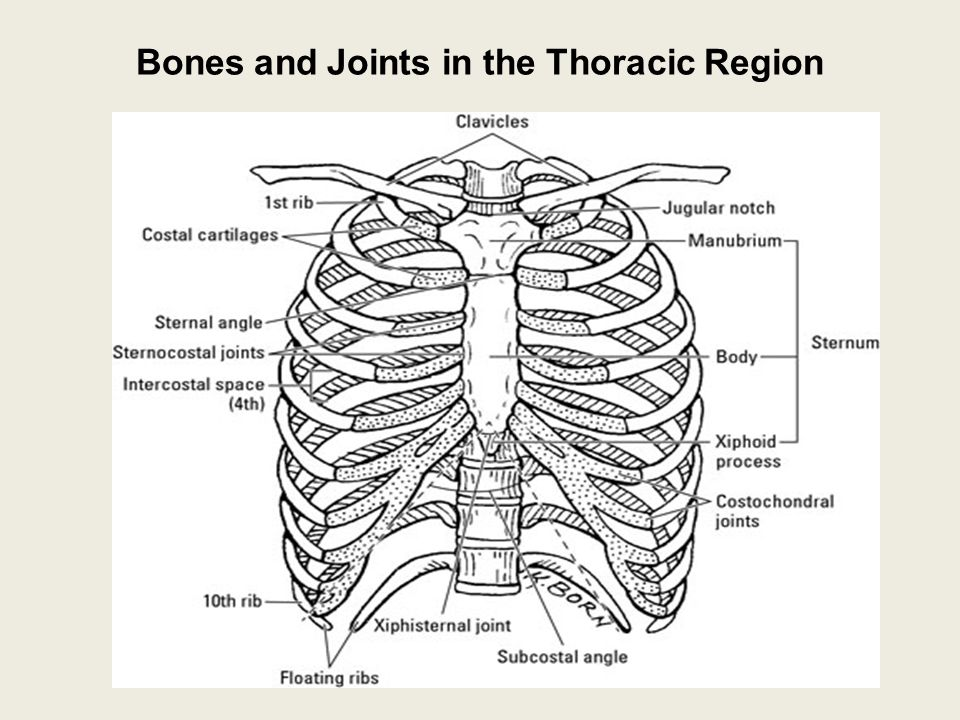 Joints of thoracic wall Mechanism of breathing - ppt video online ...
