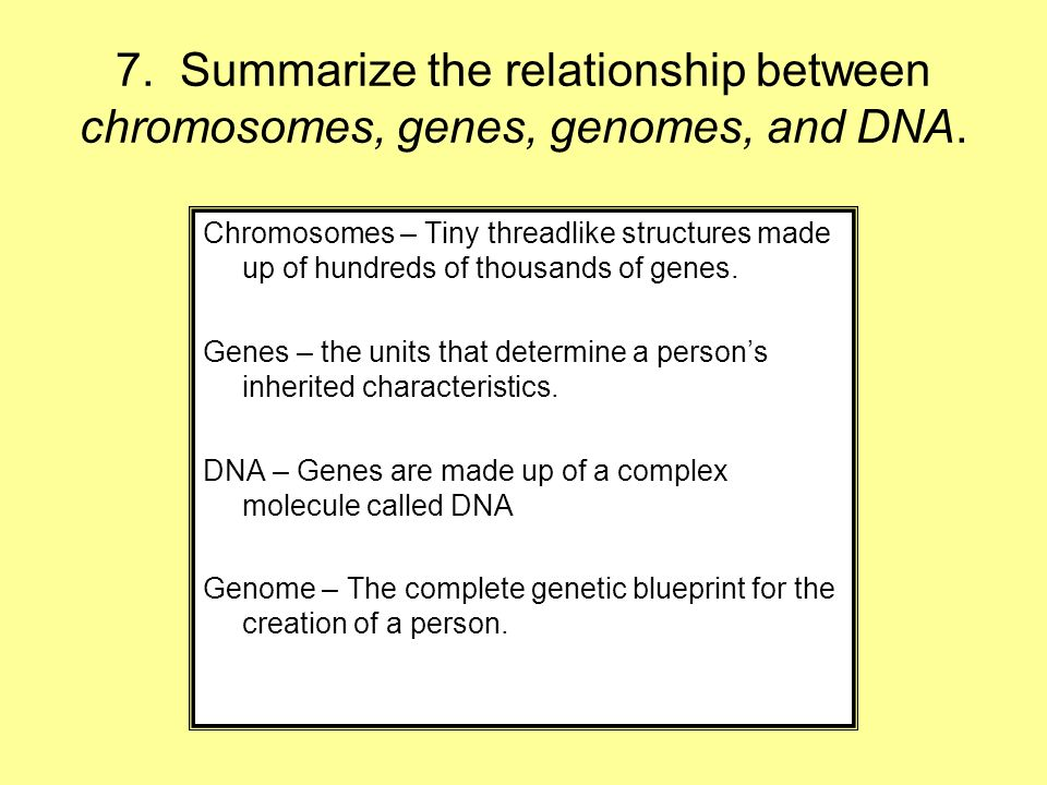 7. Summarize the relationship between chromosomes, genes, genomes, and DNA.