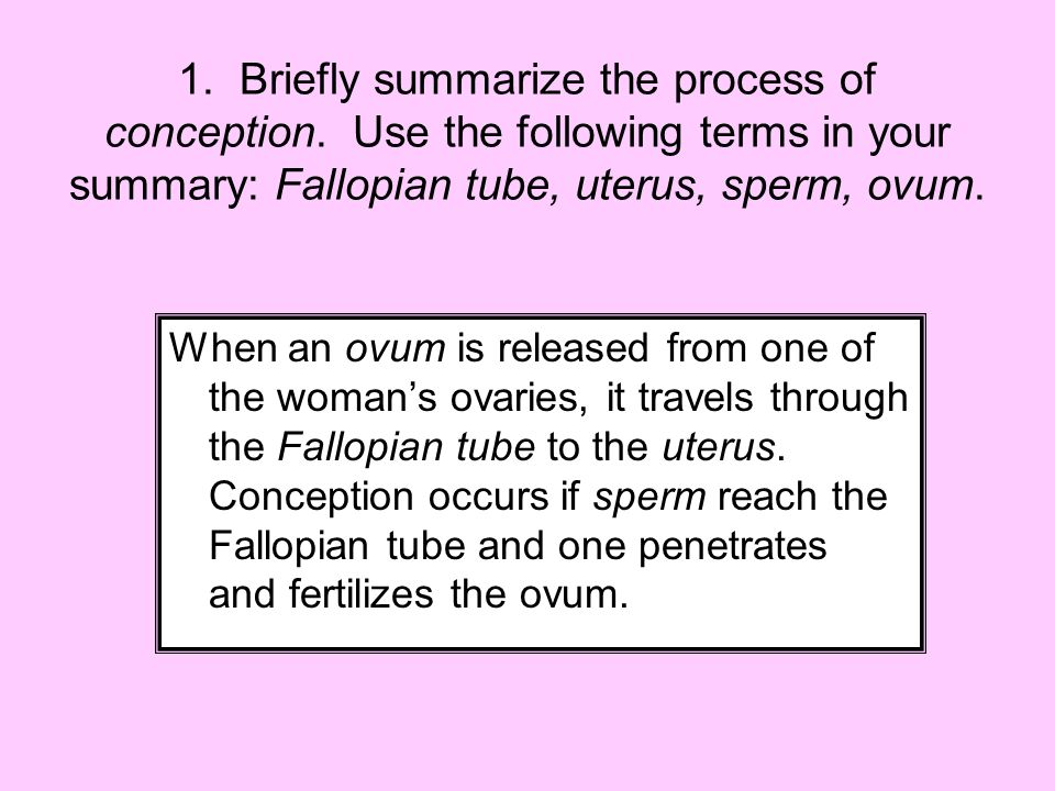 1. Briefly summarize the process of conception