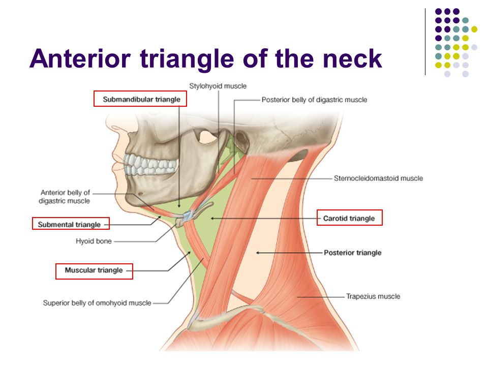 introduction of regional anatomy ppt video online download