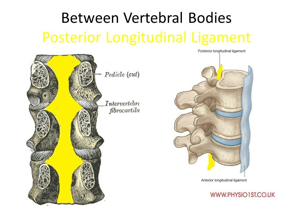 Ligamentous Anatomy Cervical Spine Ppt Video Online Download