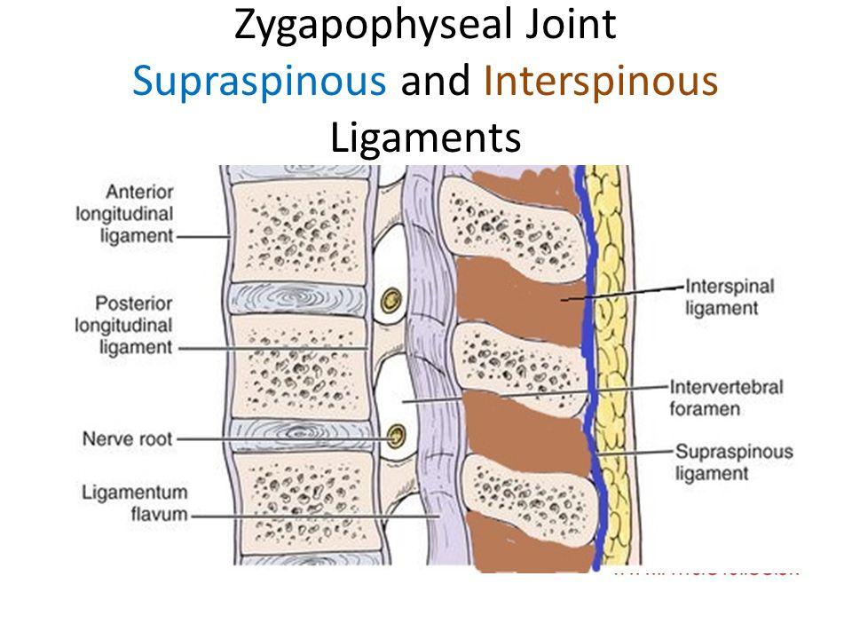 Ligamentous Anatomy Cervical Spine. - ppt video online download