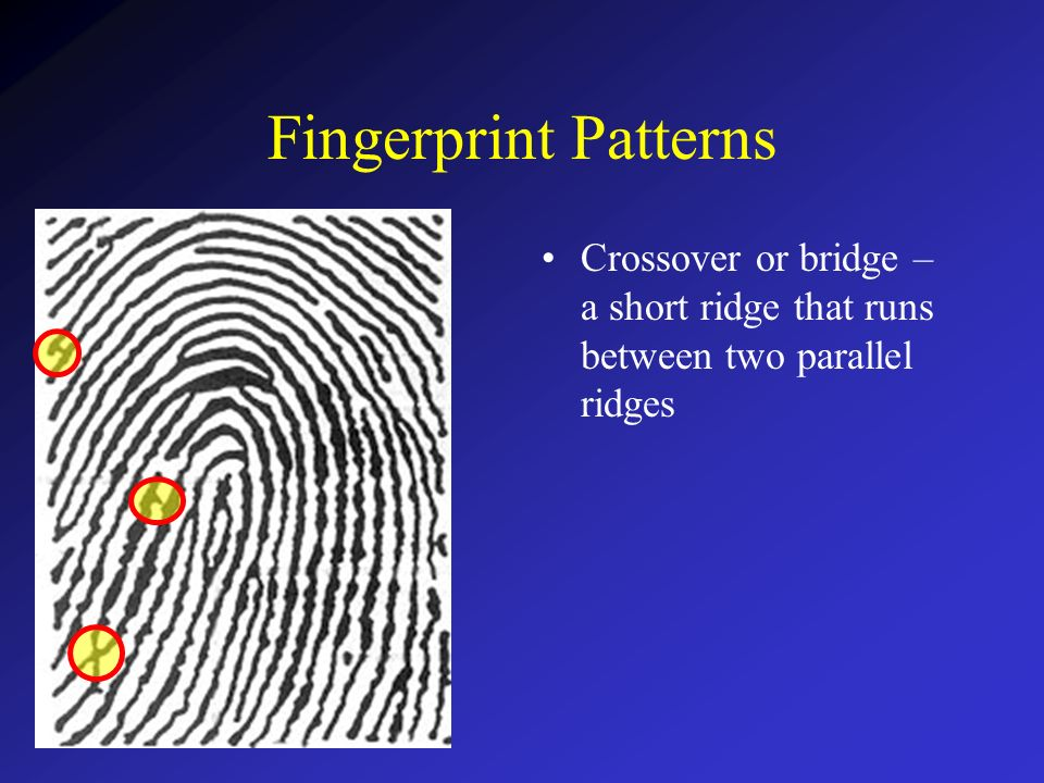 Fingerprint Patterns Minutiae Ppt Download Unique Fingerprint Patterns