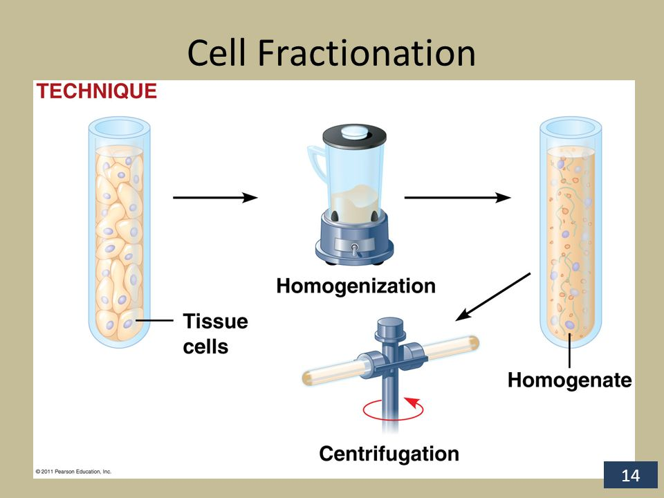 cell fractionation lab report