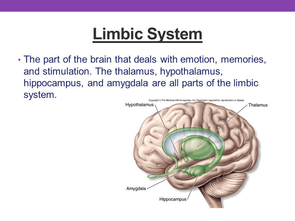 The Brain Parts Functions Ppt Video Online Download