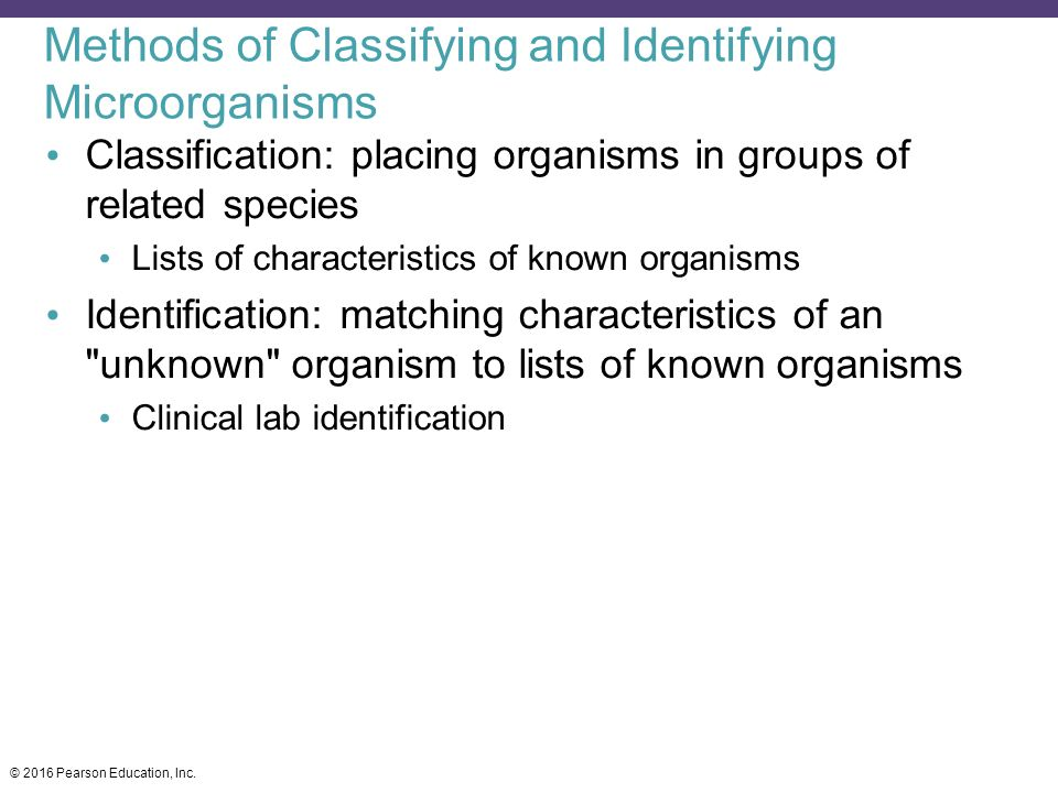 Classification of Microorganisms - ppt video online download