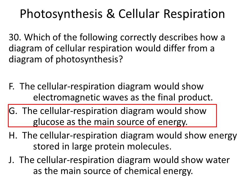 Which describes photosynthesis and respiration diagram electrical photosynthesis cellular respiration ppt download rh slideplayer com photosynthesis and respiration cycle comparing photosynthesis and respiration venn ccuart Choice Image