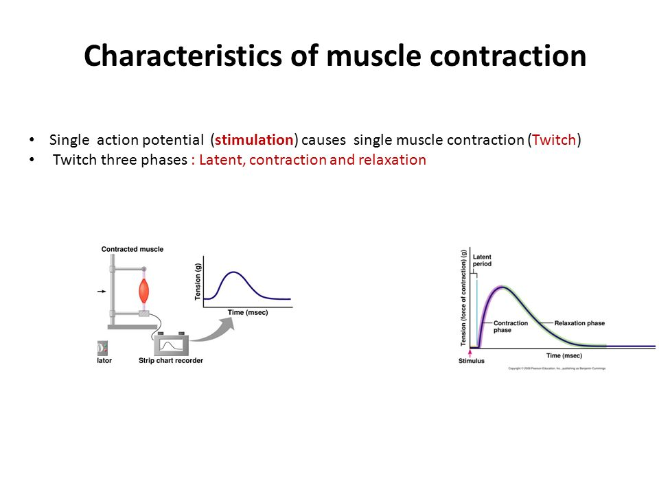 what structure was stimulated to cause a muscle contraction