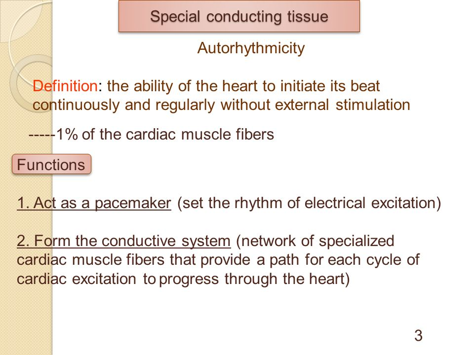 Rhythmicity And Conductivity Of The Cardiac Muscle Ppt Video