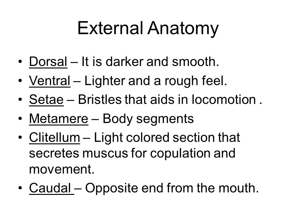 Outstanding External Anatomy Of A Worm Ideas Anatomy And