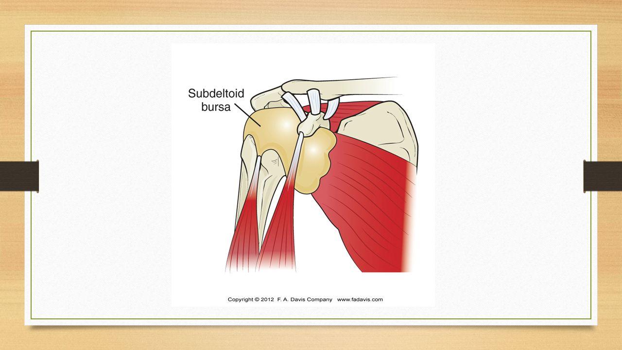 Bursae Image collections - human internal organs diagram