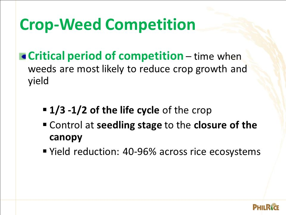 WEEDS of RICE & their MANAGEMENT - ppt video online download