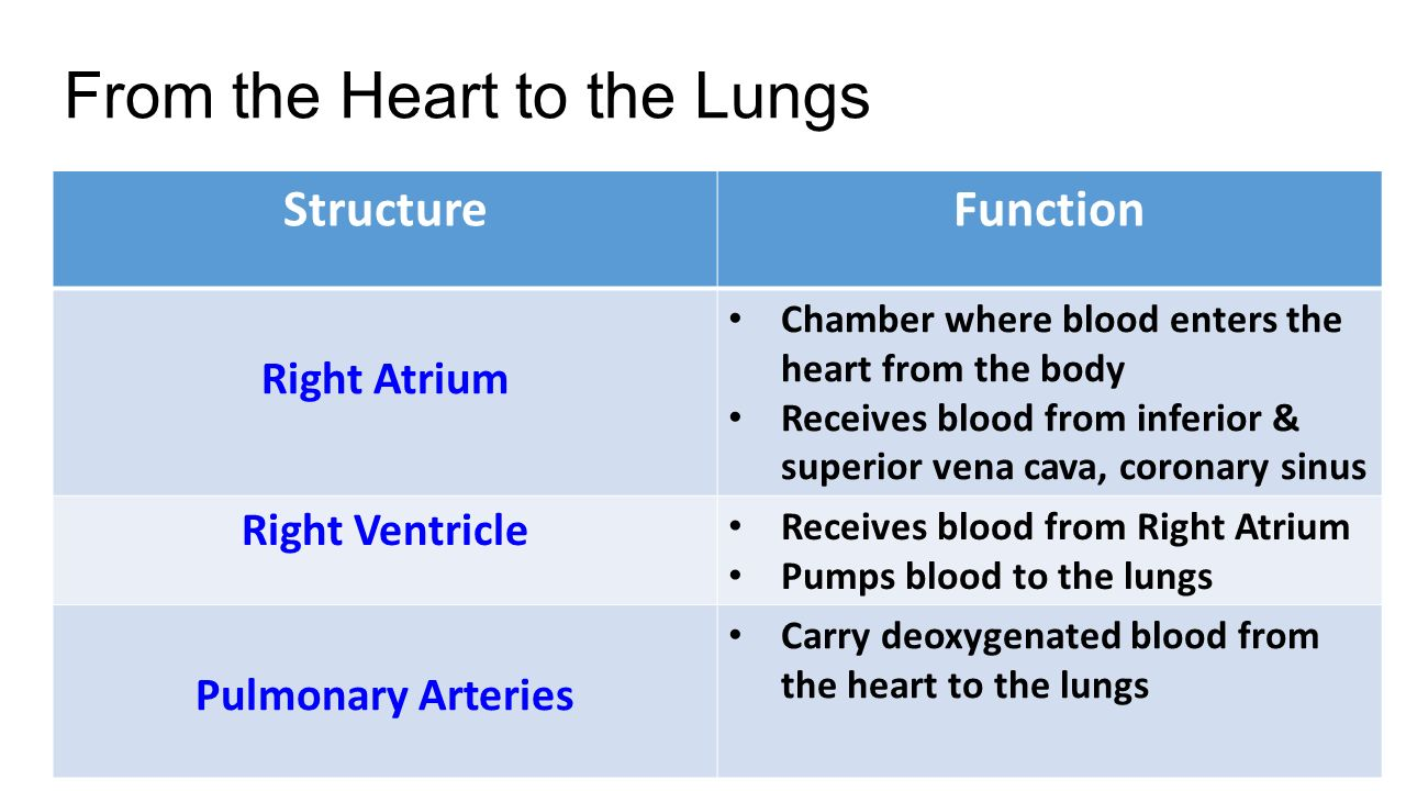 Cardiovascular System The Heart Ppt Video Online Download