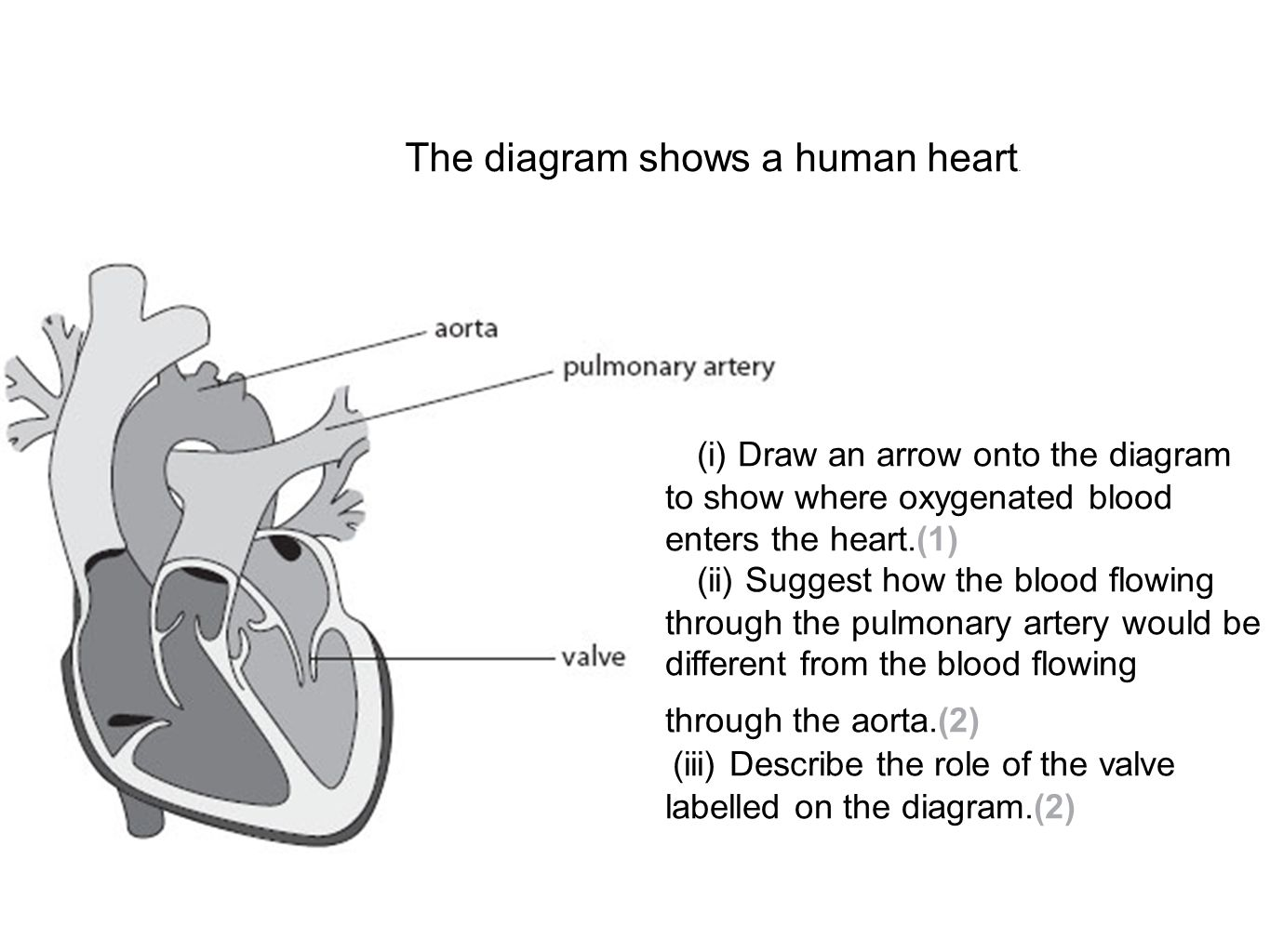 B2 Topic 3 Starter Stick In The Heart Diagram Ppt Video Online This Shows Muscles A Human