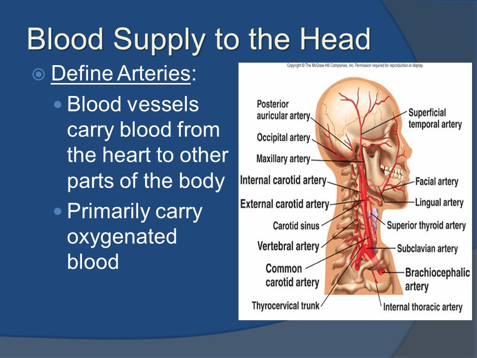Lesson V Major Blood Supply Of The Head And Neck Ppt Video Online