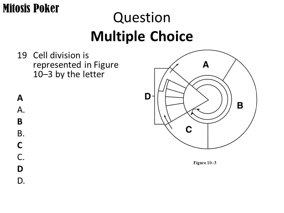 Mitosis Poker.   ppt video online download