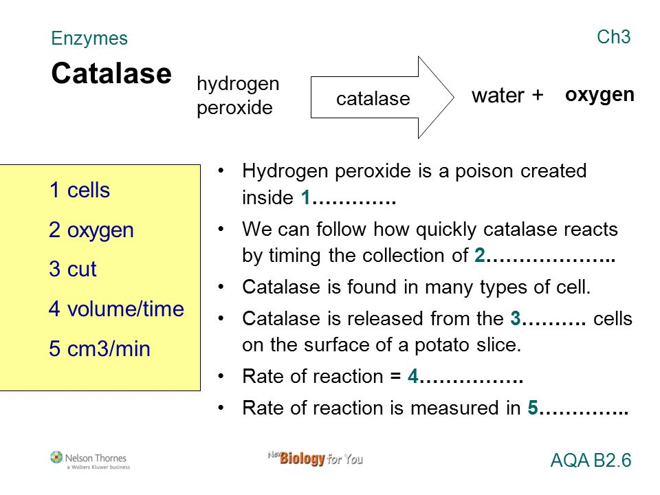 which enzyme breaks down hydrogen peroxide into oxygen and water