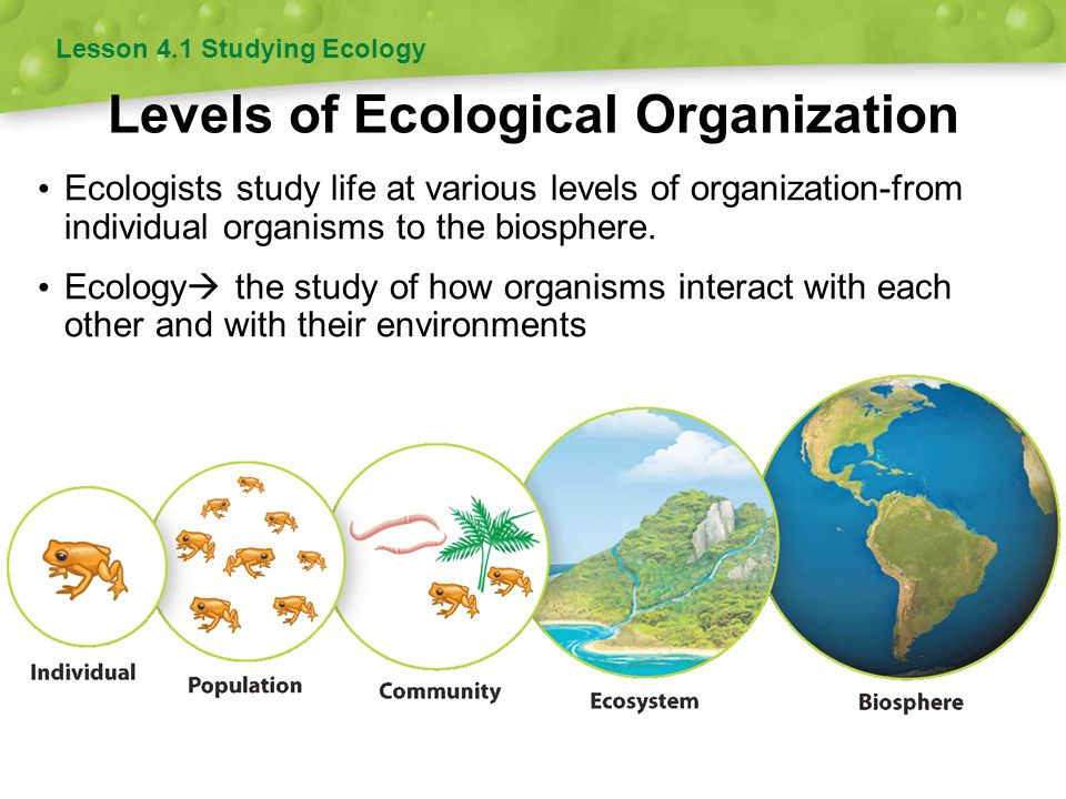 Population Ecology 4 Chapter Ppt Video Online Download