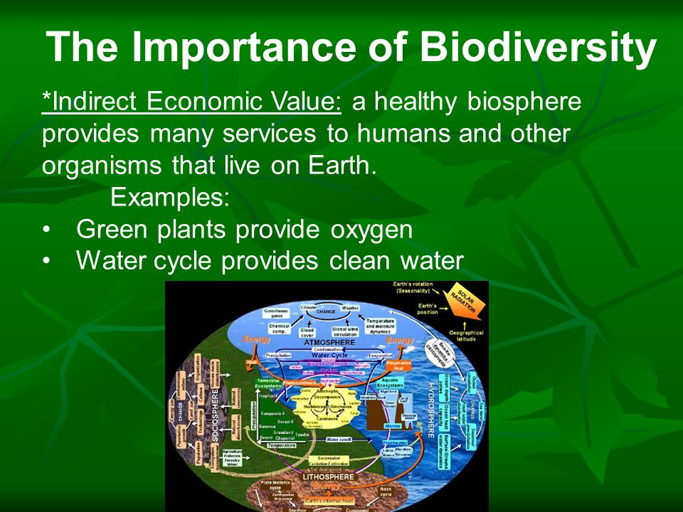 importance of biodiversity essay Biodiversity, a contraction from biological diversity is a reference to the varied life forms on earth, plants, animals and micro-organisms, their varied genes pools and habitats in the desert, oceans, coral reefs, forests and elsewhere.