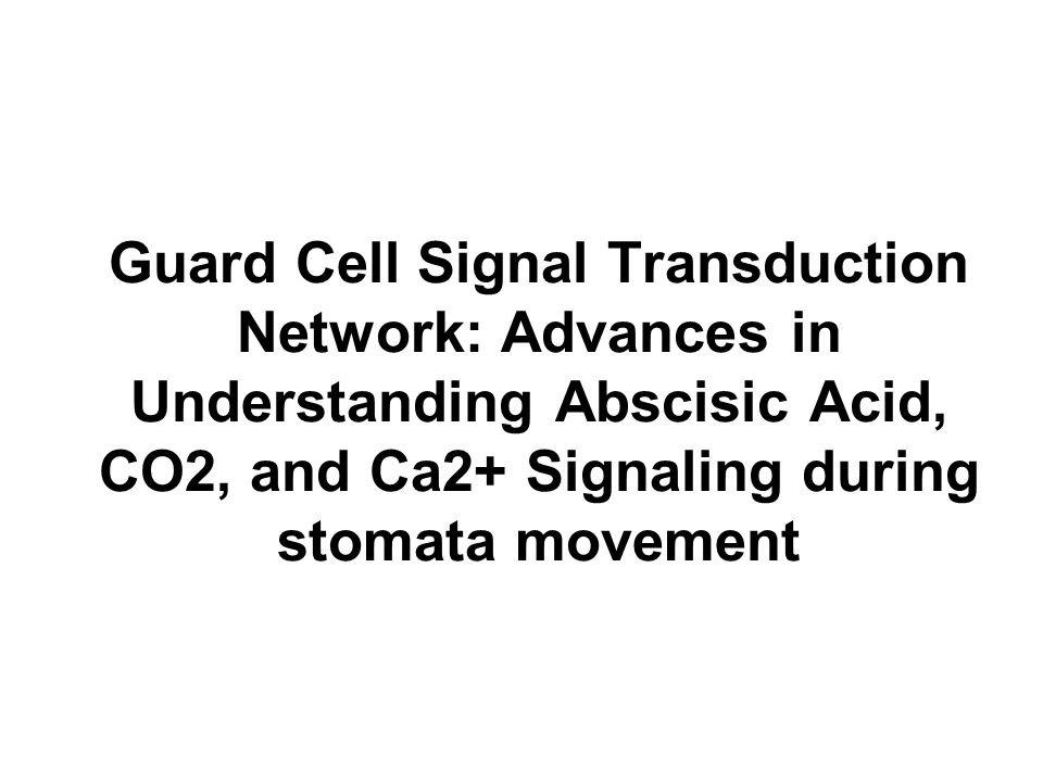 stomata and guard cell metabolism