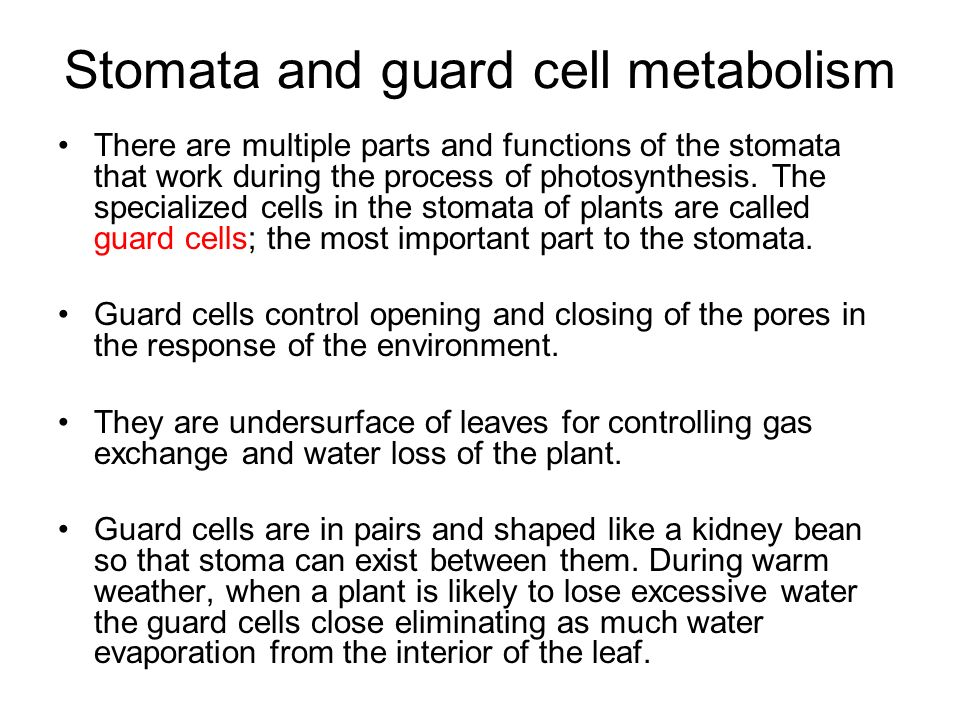Stomata and guard cell metabolism - ppt video online download