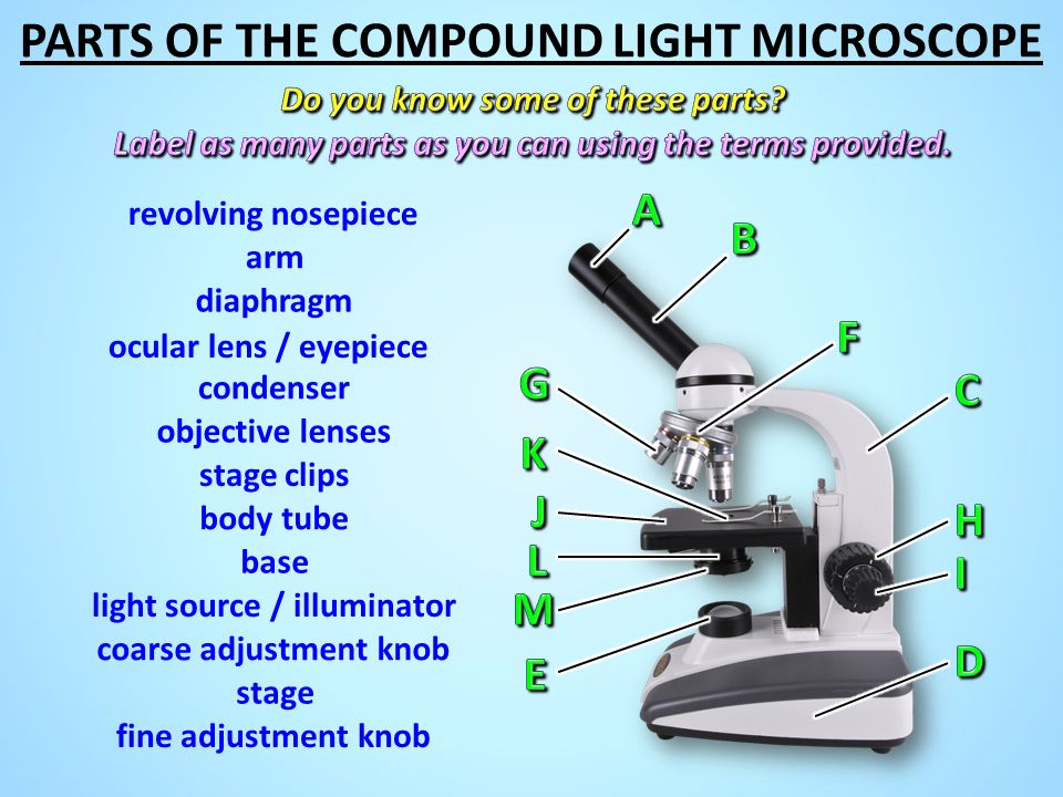 learning parts and proper use of microscope, and the interception of images viewed through a light m They don't use optical light, but beams of electrons and magnetic fields to view specimens thicker specimens don't let enough light through and don't allow precise focusing for small items such as hairs, small insects, insect parts or pollen grains, the sample is placed directly on the center part of a.