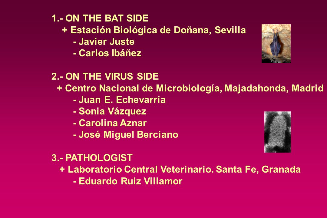 1.- ON THE BAT SIDE + Estación Biológica de Doñana, Sevilla. - Javier Juste. - Carlos Ibáñez. 2.- ON THE VIRUS SIDE.