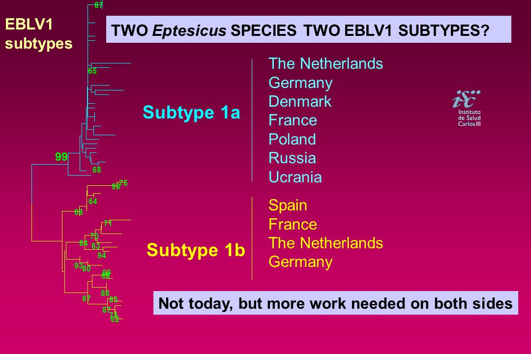 Subtype 1a Subtype 1b EBLV1 TWO Eptesicus SPECIES TWO EBLV1 SUBTYPES