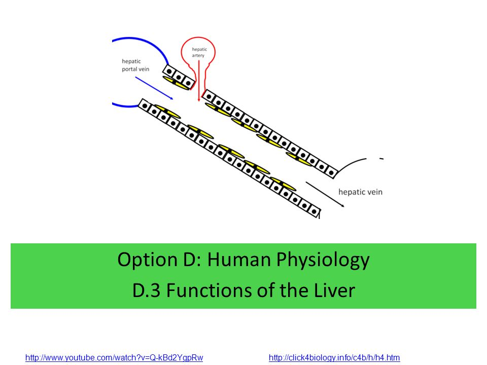 Option D Human Physiology D3 Functions Of The Liver Ppt Download