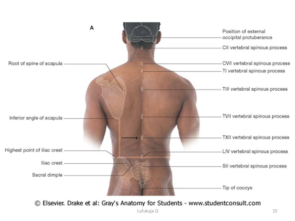 The upper limb (Osciology) - ppt download