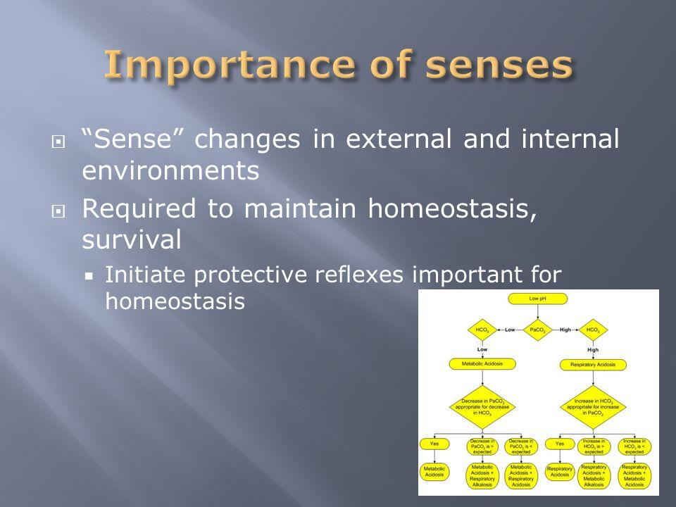 classification of sense organs